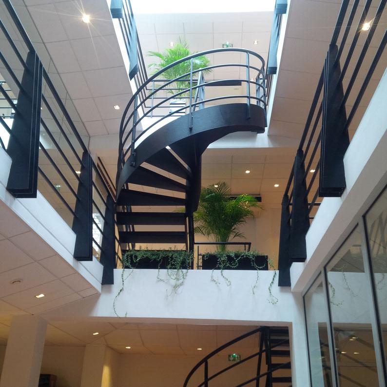 Aménagement et décoration: Plantes vertes pour les bureaux d'une start up