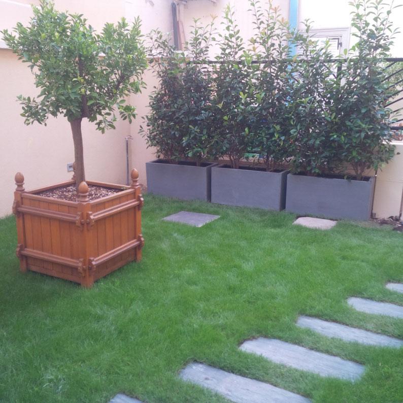 Terrasse Jardin Plantes Gazon