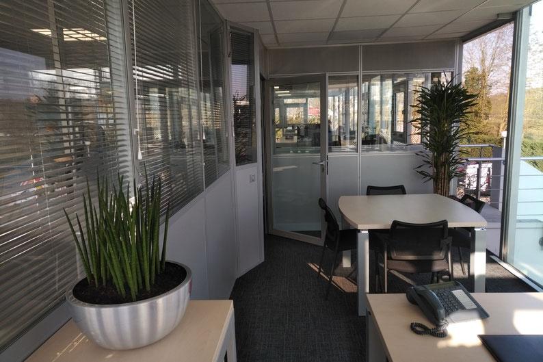 Location de plantes d'intérieur pour vos bureaux