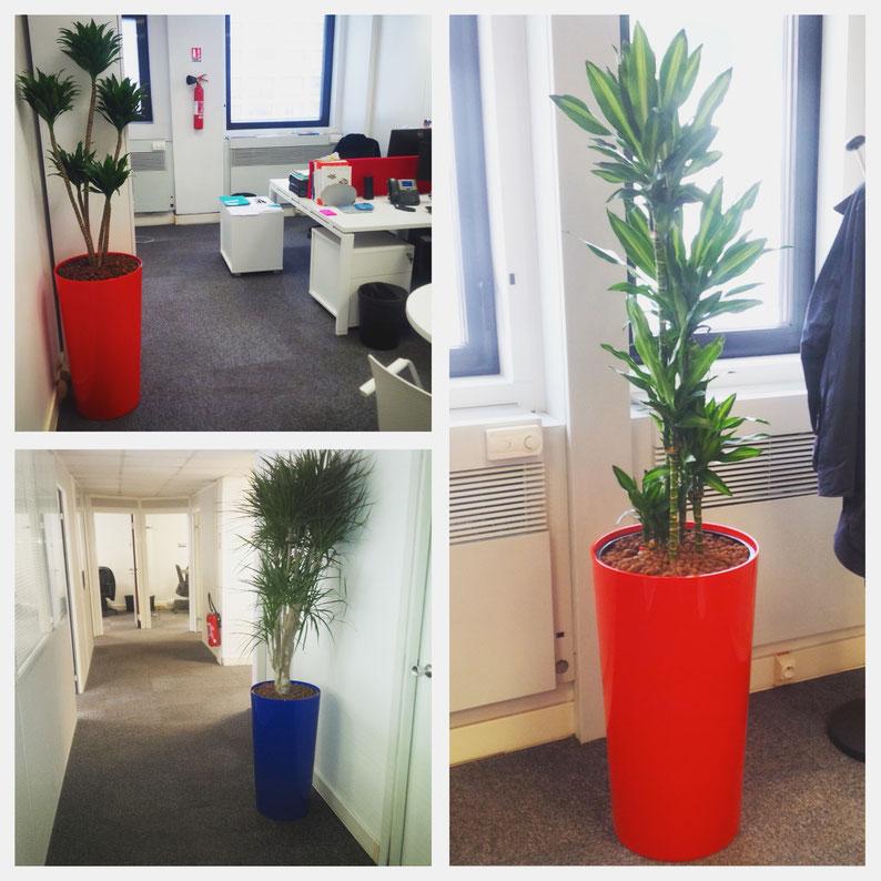 Décoration végétale des bureaux de notre nouveau client à Paris.