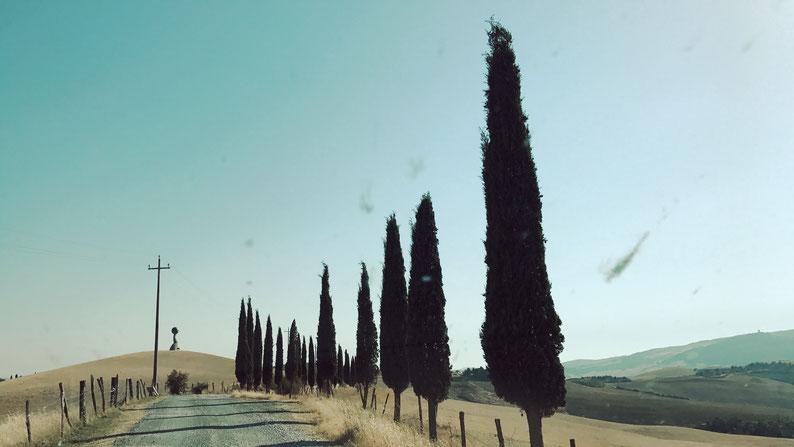 Toscana // Volterra // Weg zur Fattoria Lischeto // Zypressen // Primi passi by Mario Staccioli