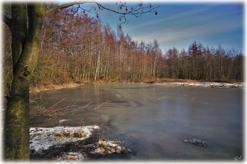 Die zugefrorenen Tümpel im Haeselaarsbroek (NL)