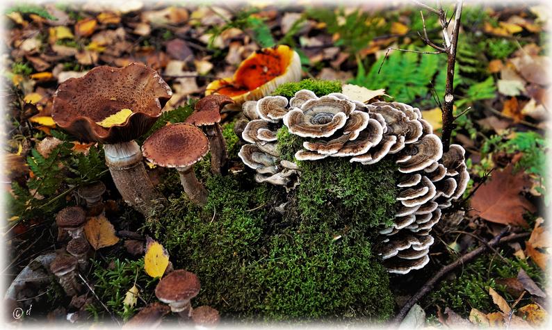 """Baumstumpf """"Tre Funghi"""" -  Der bunte Waldpilzteller auf Moosbett mit Herbstblattsalat"""