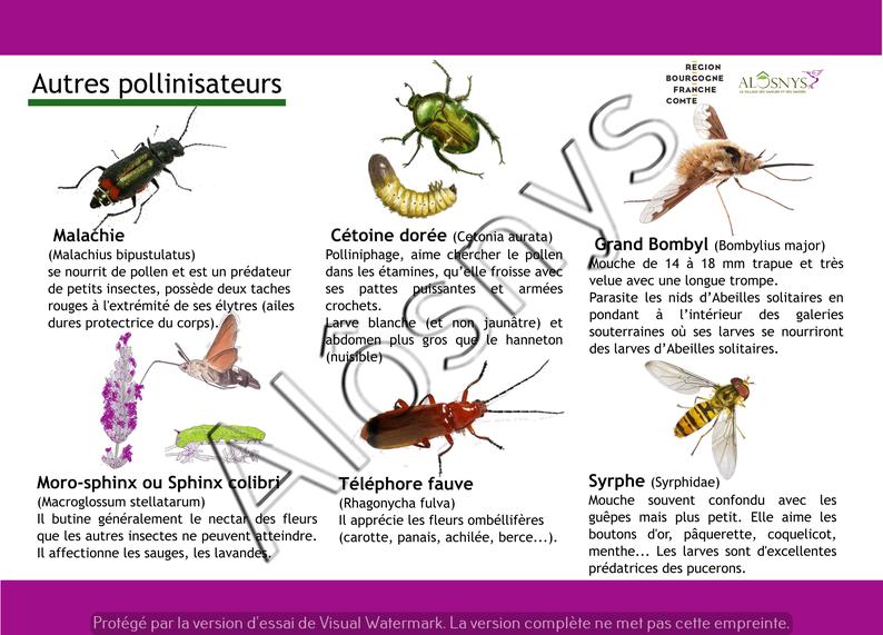 Panneau pédagogique des pollinisateurs
