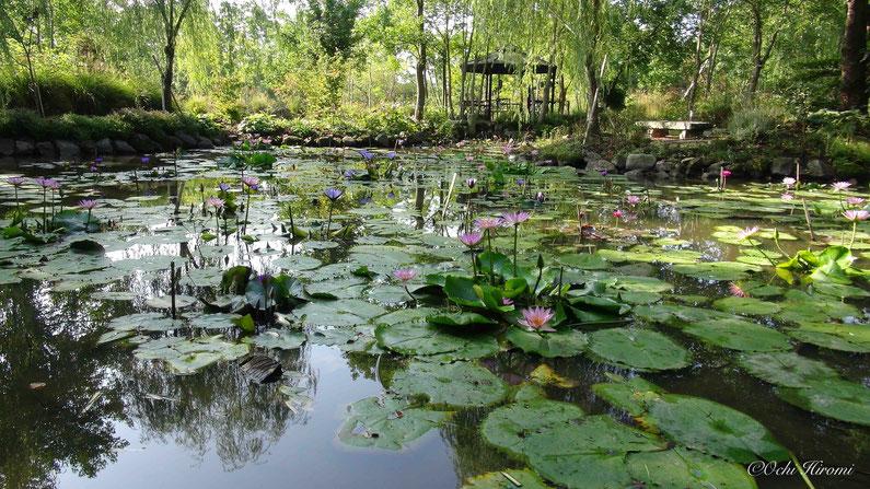 天光地 睡蓮の池 モネも驚く美しさ 世界一 南将路先生