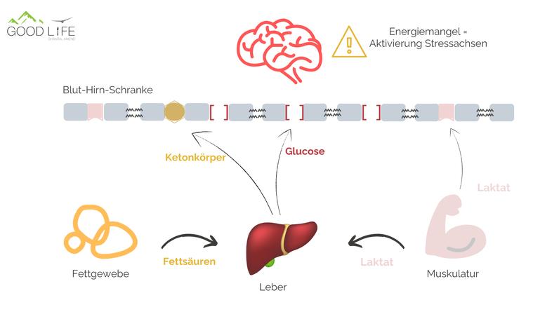 Good Life Blog: Brain Food - Energiequellen & Nährstoffe für ein leistungsfähiges Gehirn und gute Denkleistung
