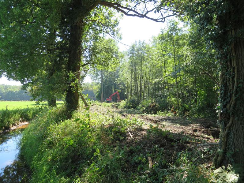 In augustus 2016 zijn in het kader van het ontwikkelingsplan de exoten (Populieren) langs de beneden Slinge uit het Eikenmoeras gekapt.