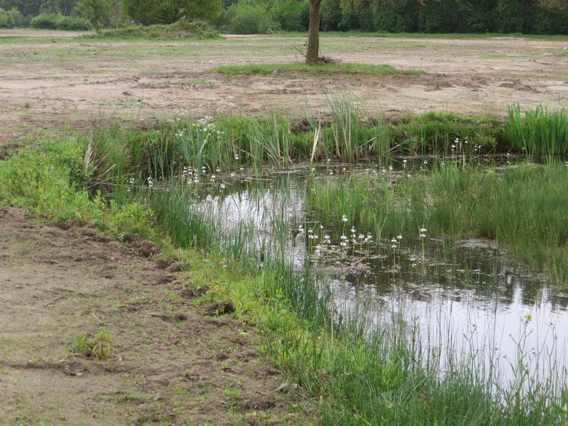 Natuurontwikkeling Groenendaal