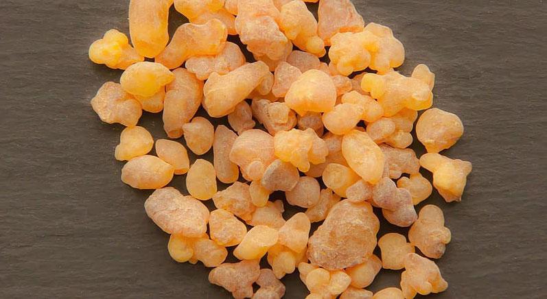 Il Boswellia, un arbusto da cui si estrae una resina profumata che, dopo un processo di lavorazione, diventa incenso - Oman