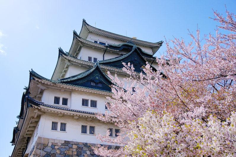 名古屋城_桜の名所