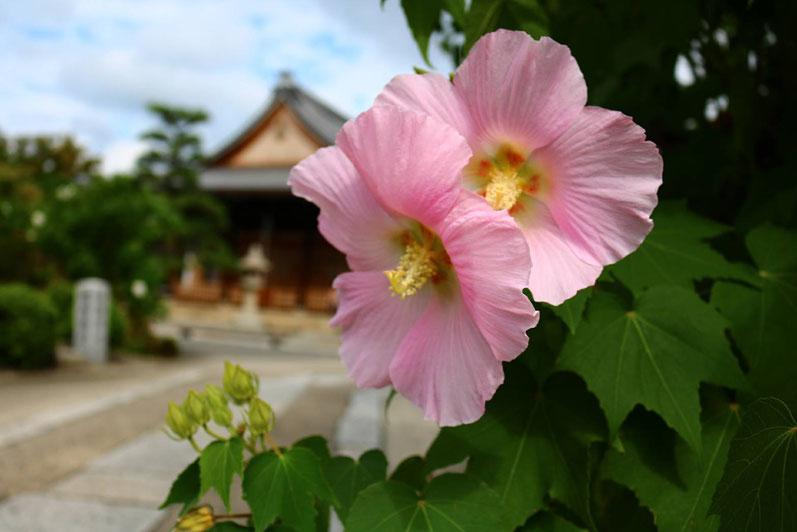 京都市下京区四条烏丸にあるメンタルクリニック、うつ度チェックをやってみましょう、芙蓉