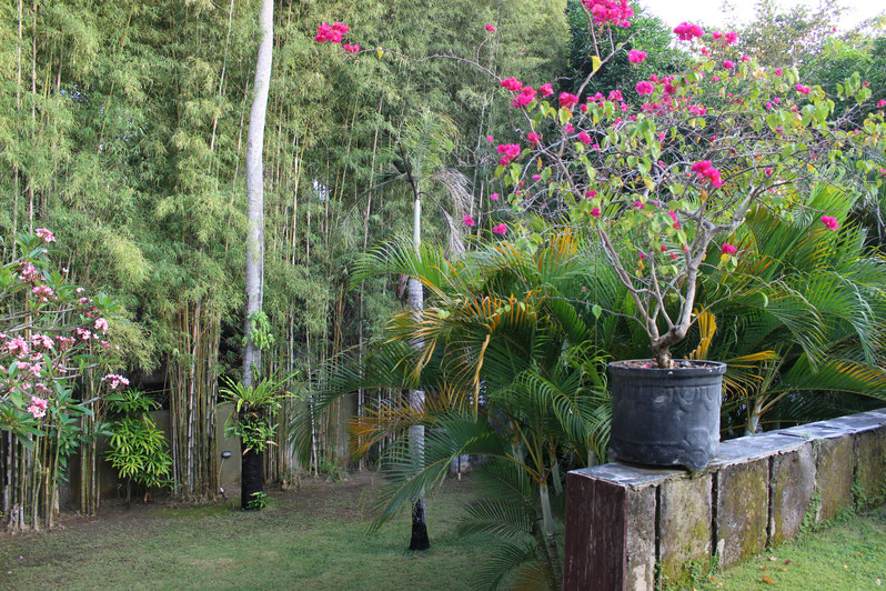 Bamboo trees, tropical flowers and green