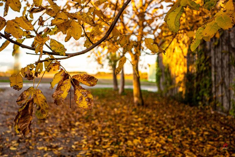 Einfach Herbst
