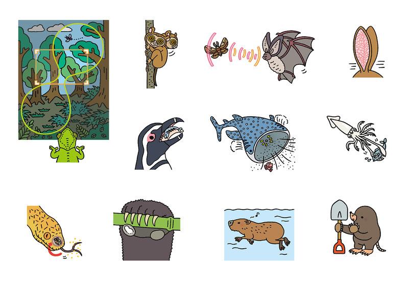 いろいろな動物の特徴イラスト