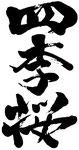 四季桜(栃木)