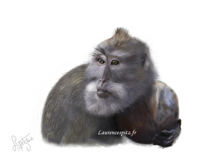 • Le maccaque •.dessin numérique de Macaque d'après une de mes photos