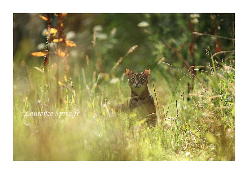 MG 8414 • Le matou • Le chat