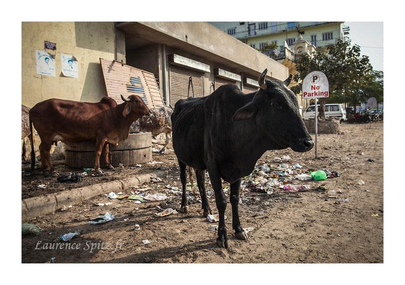 • No parking • Pushkar