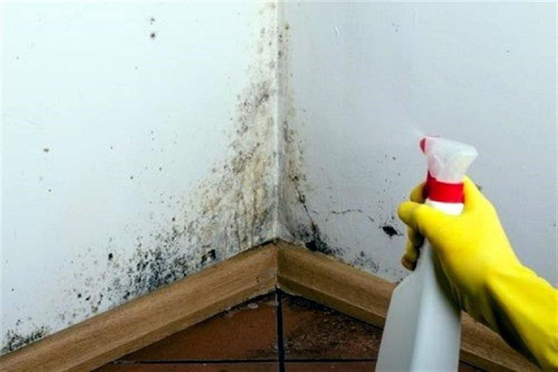 ¿Como quitar el moho de las paredes?