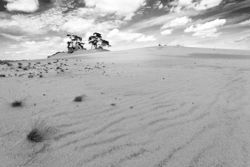 Landschap Kootwijker Zand, zwart-wit fotografie