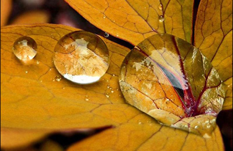 herfstblad met regendruppels