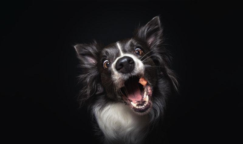 Hund, Hunde & Leckerlis, Hundeportrait, Hundeporträt, Foto von Hund, Tiere, Sebastian Frank Fotografie, Fotograf Tulln, Fotograf Wien, lustiges Tierfoto, lustiges Hundefoto