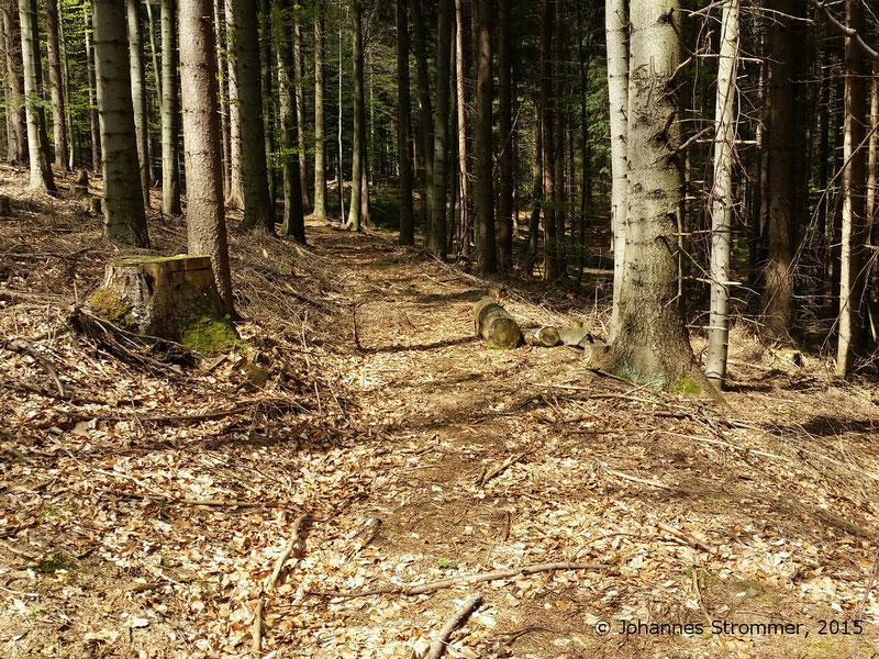 Abbildung 4:  Hier ist die alte Waldbahntrasse komplett erhalten und frei von jeglichem Bewuchs! Blickrichtung Streckenende. (Waldbahn Rekawinkel)