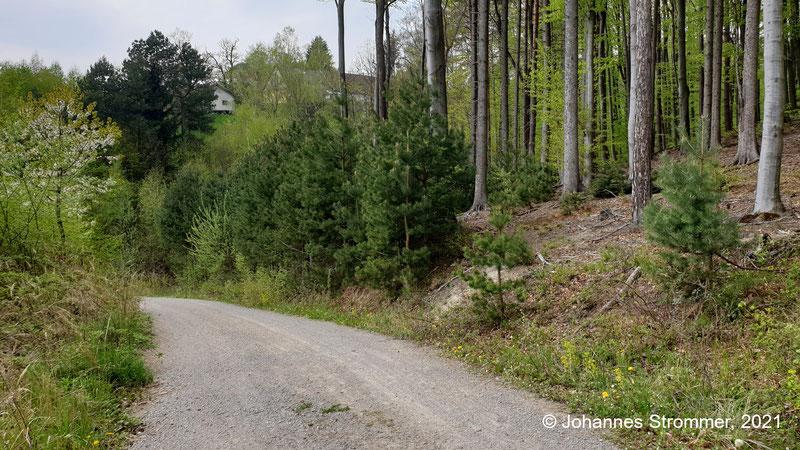 Ungefähr in Bildmitte, wo die Föhrenbäume stehen, zweigt die Trasse der Waldbahn von der Forststraße ab. Man kann den kleinen Wald rechts umgehen.