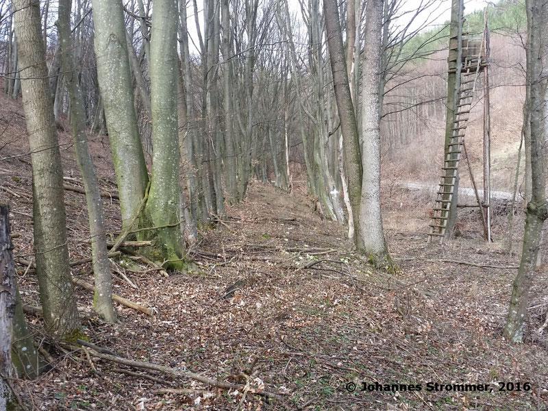 Waldbahn Haselbach: Hier sieht man ein sehr gut erhaltenes Trassenstück. Dieser Abschnitt ist ca. 300 m lang. Blickrichtung Streckenende.