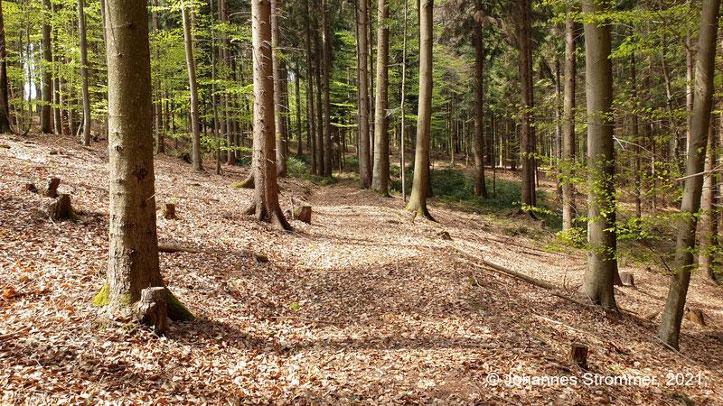 Ca. 200 m langer Abschnitt der Waldbahn Rekawinkel abseits der Forststraße
