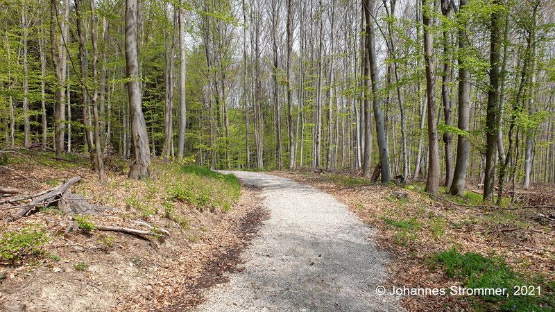 Hier verläuft die Waldbahn in einem Bogen. Blick Richtung Streckenende. Waldbahn Rekawinkel.