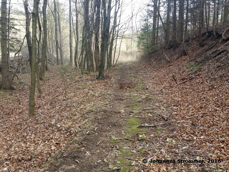 Waldbahn Haselbach: Hier zweigte die 150 m lange Seitenstrecke in den Kreuzgraben ab, von der bis auf diesen kurzen Bahndamm keine Spuren mehr erhalten sind. Blickrichtung Streckenende.