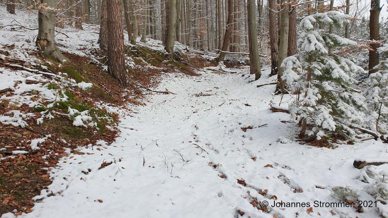 Dieses Bild zeigt einen Einschnitt der Waldbahntrasse, aufgenommen kurz nach den nördlichen Fundamentresten aus dem vorigen Foto. Blickrichtung Streckenende (Waldbahn Rekawinkel).