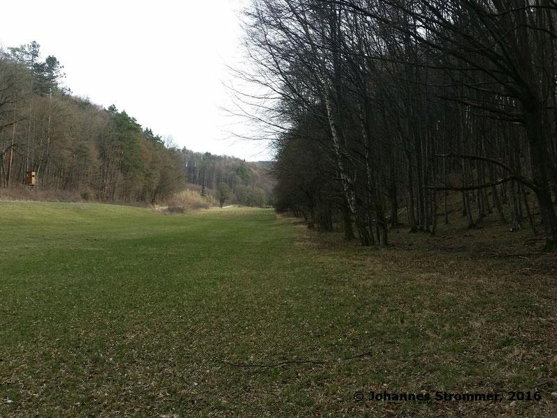 Waldbahn Haselbach: Die Strecke verläuft hier entlang eines Waldrandes. Blickrichtung Streckenanfang.