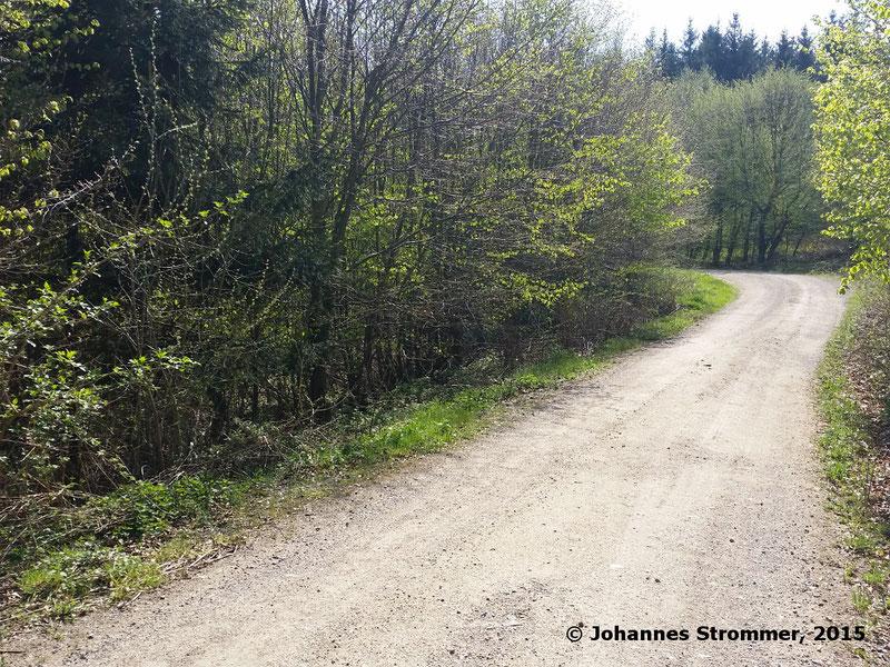 """Abbildung 11: Die Waldbahntrasse kreuzt an diesem Ort (""""Am Hagen"""") die Forststraße, Verlauf in etwa der Mitte des Bildes. Die Aufnahme entstand unweit der Abbildung 10. Blickrichtung Bahnhof Rekawinkel. (Waldbahn Rekawinkel)"""