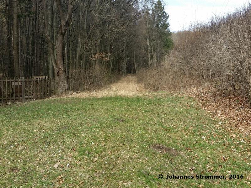 Waldbahn Haselbach: Hier beginnt ein gut erhaltenes Trassenstück, das ca. 500 m lang ist. Blickrichtung Streckenende.