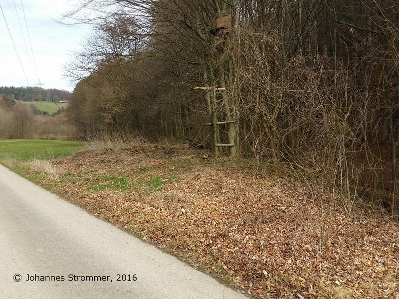 Waldbahn Haselbach: Anfang der Strecke beim Forsthaus im Ort Fahrafeld. Das Gleis verlief auf dem noch erhaltenen Erddamm. Blickrichtung Streckenende.