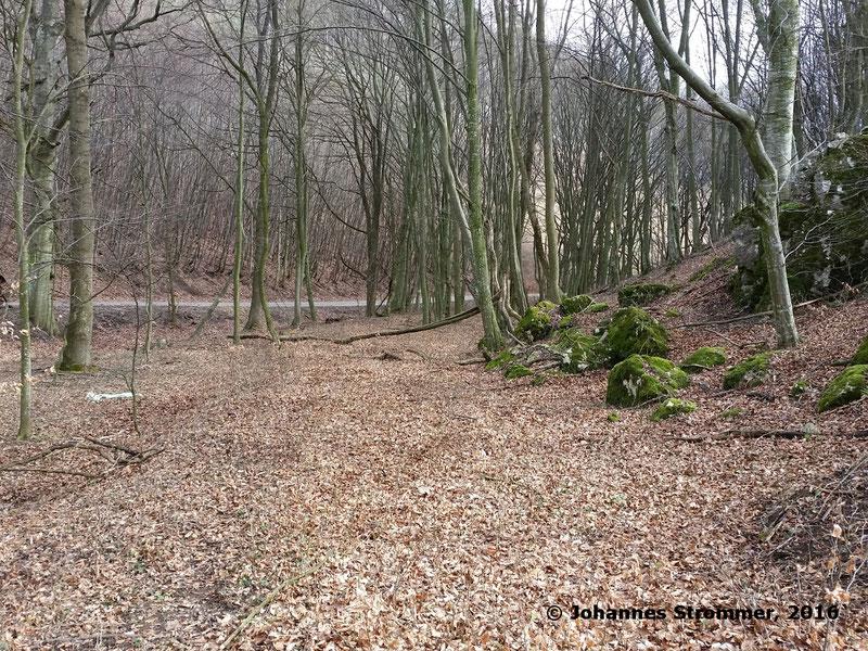 Waldbahn Haselbach: Die Strecke endet vor einer Wiese. Blickrichtung Streckenanfang.