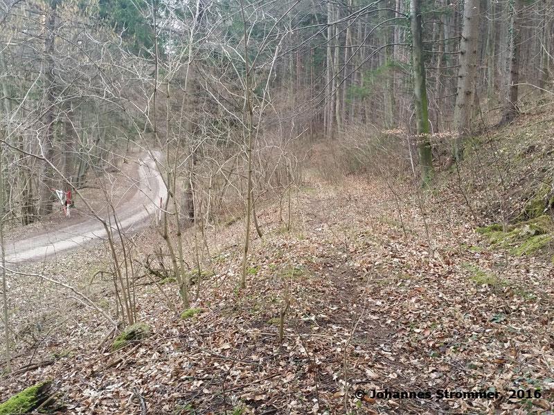 Trasse der Waldbahn Haselbach neben Forststraße. Blickrichtung Streckenende.