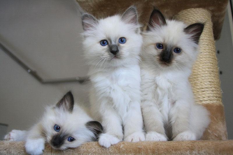Joe, Jim et Jackson