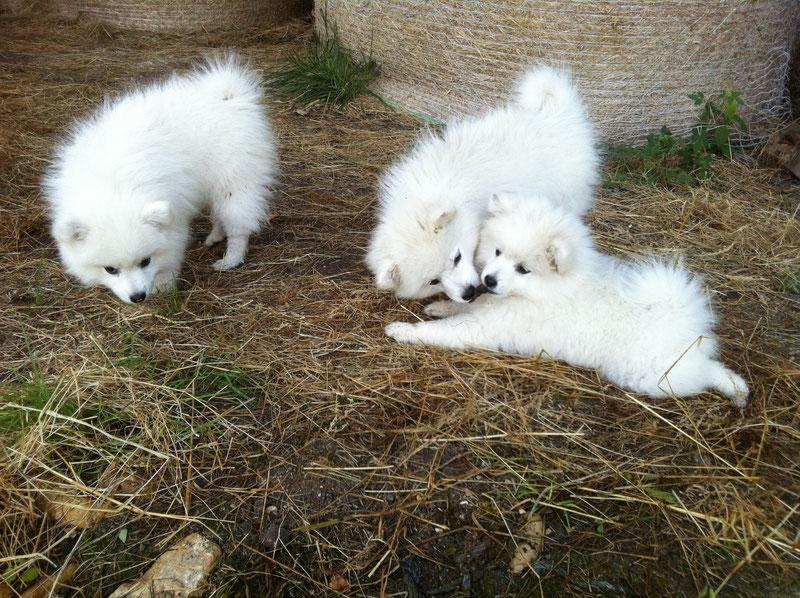 Les 3 femelles de 2 mois et demi