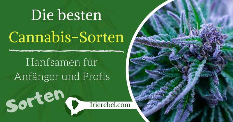 Die besten Cannabis Sorten - Hanfsamen für Anfänger & Profis