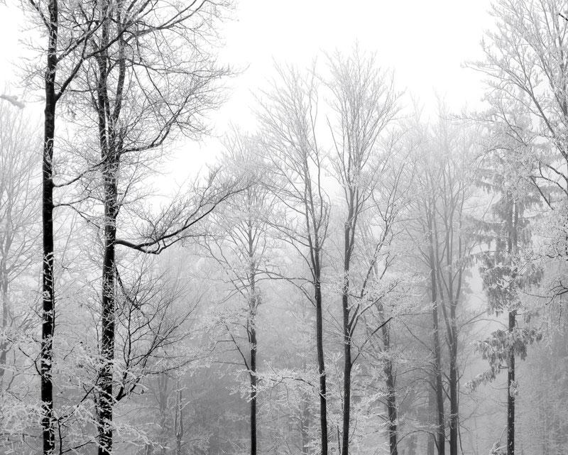 Winter 2013 #1 - Bayerischer Wald (Copyright Martin Schmidt)