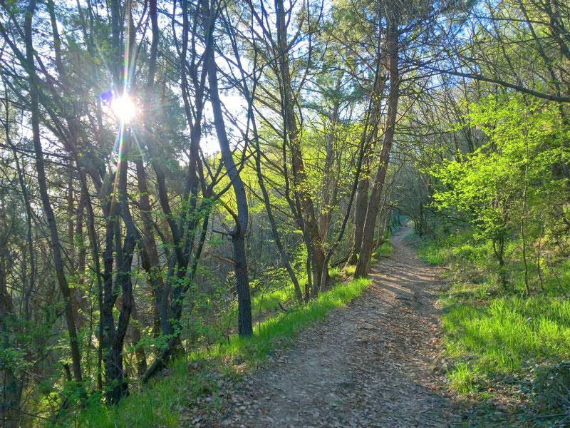 zu Fuß zum Strand, der Weg im Wald über den Klippen