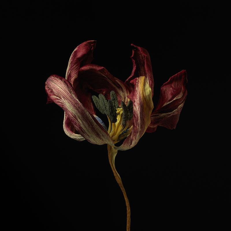 Marc Junghans Fotografie, Floralis