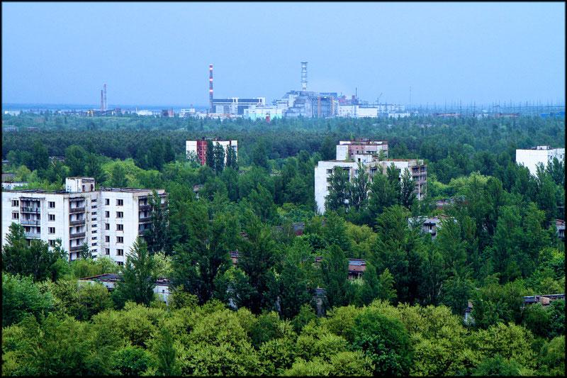 Die Bäume von Pripyat (Pripyat (Ukraine), Mai 2011)