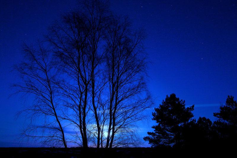 Der Mond ist aufgegangen... (Nemitzer Heide, Januar 2012)