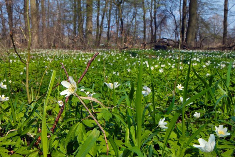 """""""Maigrün im Frühling"""""""