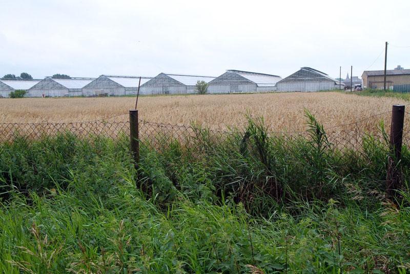 """Blick vom Gelände der ehemaligen Rohgas-Mischstation am Stadtrand von Salzwedel. Die Station wurde 2002 abgebaut, das Gelände """"saniert"""" und Teile des Bohrgestänges als Zaunpfähle genutzt."""