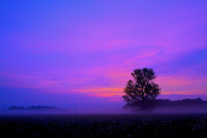 Sonnenaufgang auf einer Pusteblumen-Wiese (Jahrsau, Mai 2011)